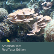 AmericanReef - ReefTutor for the