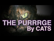 THE PURGE (Kitten Version) - THE PURRRGE