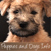 Puppies And Dogs Info TV - Video Podcasts