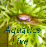 Aquatics Live Podcast