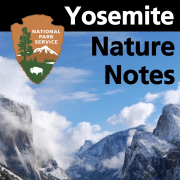 Yosemite Nature Notes