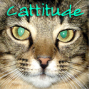 PetLifeRadio.com - Cattitude -  All about cats as pets on Pet Life Radio.