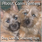 About Cairn Terriers - Dog Care and Training Tips