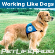 PetLifeRadio.com - Working Like Dogs - Service Dogs and Working Dogs  on Pet Life Radio