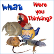 PetLifeRadio.com - What Were You Thinking - All about exotic pets & animals you can keep as a pet on Pet Life Radio.