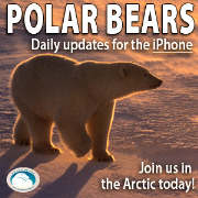 Polar Bears HD for iPhone