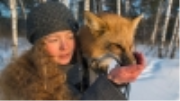 Is this Siberian fox wild, domesticated or something in between?
